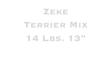 Zeke Terrier Mix 14 Lbs. 13""